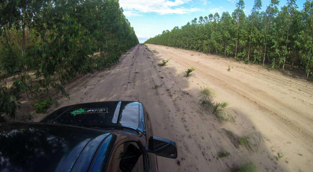 Floresta de Eucalipto - Ponte Alta do Tocantins - Jalapão - Vamos Trilhar